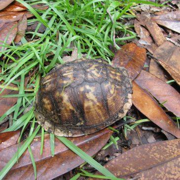 Turtle #5