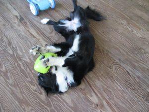 Nikki with Ball