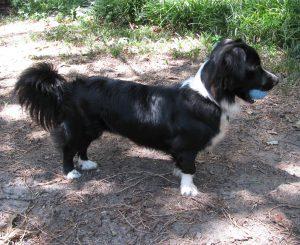 Nikki Dog