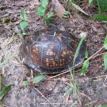 Turtle #6