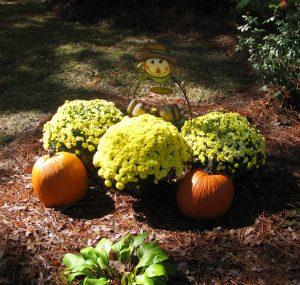 Fall garden display
