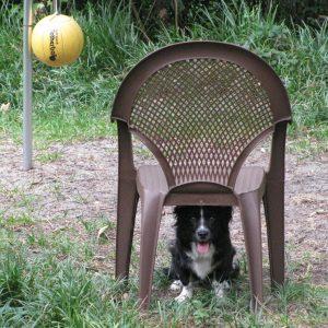 Nikki waiting under chair