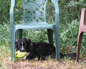 Nikki under chair with ball