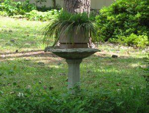 Flower Pot in Birdbath