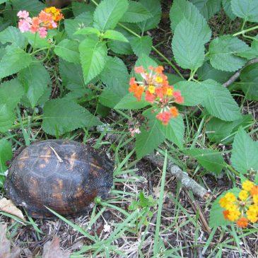 Turtle #7