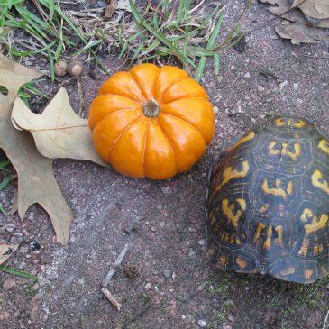 Turtle #8