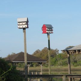 The Birds of Pawley's
