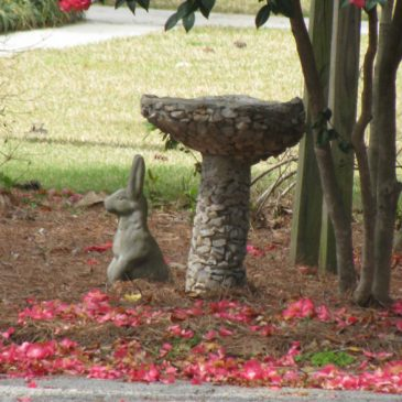 Things in Birdbaths that Are Not Birds #4