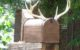 Mailbox with Antlers