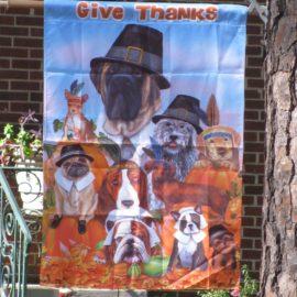 An All-Dog Thanksgiving
