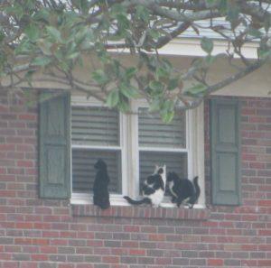 Cats on Window Ledge