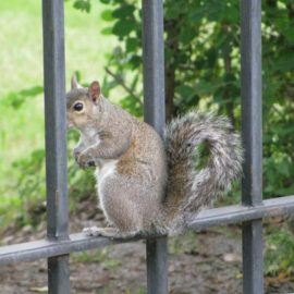 Squirrel Behind Bars
