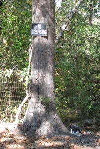 Cat under Trespassing Sign