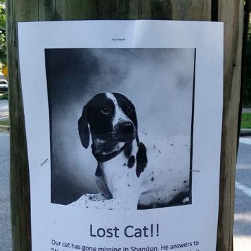 Lost Cat?