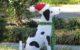 Dog Christmas Statue
