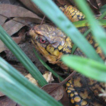 Turtle #13