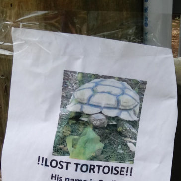 Another Lost Animal