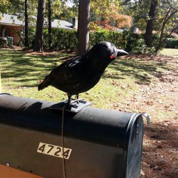 Crow 1, Scarecrow 0