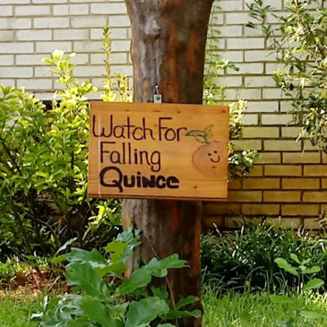 Falling Quince
