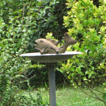 Things in Birdbaths that Are Not Birds #6