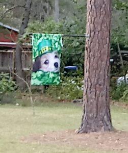 Dog on St. Patrick's Day Flag