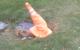 Crinkled Traffic Cone